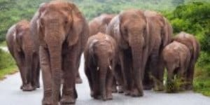 Elephant family walking on a tarmac road with green vegetation behind