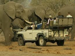 Safari companies