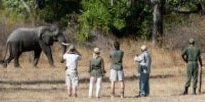 Tanzania Safari Tour Companies 2