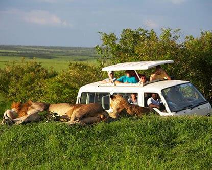Safari types