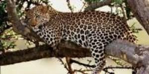 Botswana Safari Tour Companies 2