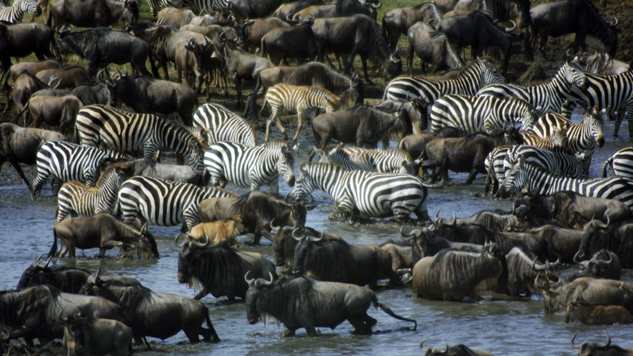 African National Parks 5