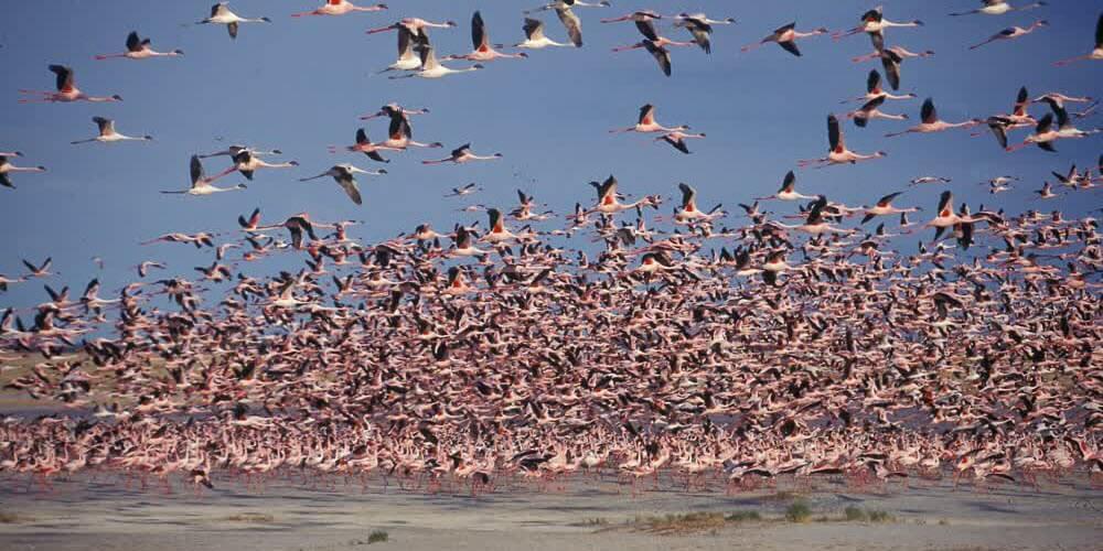 Botswana Safaris 6