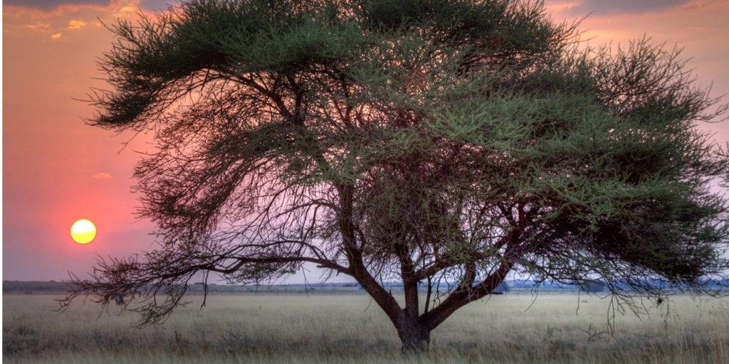 Botswana Safaris 7