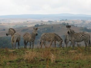 Malawi safari tours