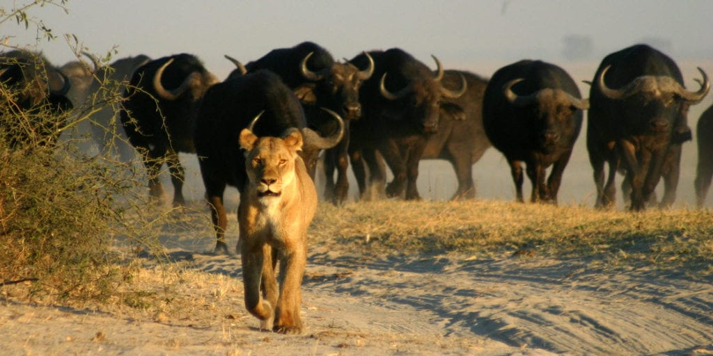 Botswana Safaris 4