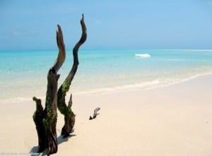 Mozambique safari tours