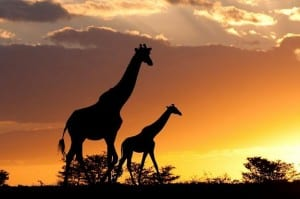 Safari resources