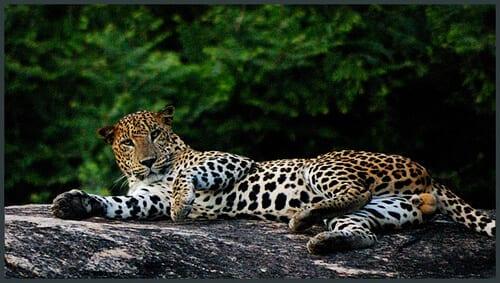 Sri Lankan safari tours