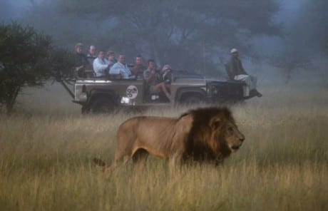 South Africa safari tours