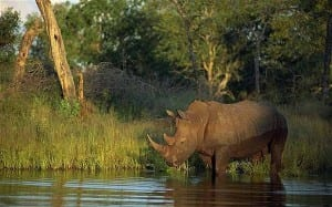South Africa safaris