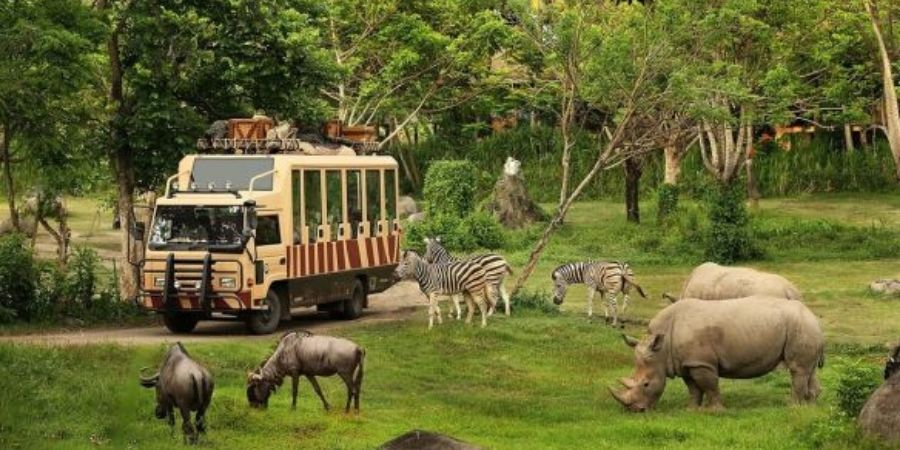 van in safari park