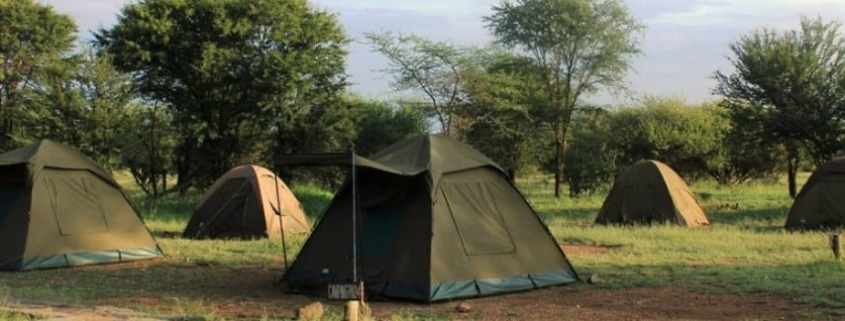 5 two-man green safari tents pitches on flat grass and muddy clearing with trees in backgorund