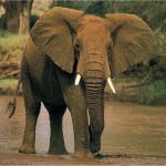 The Best Safaris In The World! 1