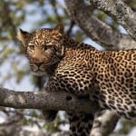 The Best Safaris In The World! 3