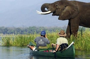 An alternative wildlife view on a canoe safari
