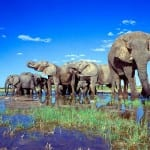 The Best Safaris In The World! 5