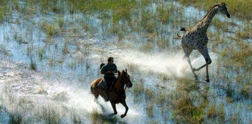 Horse riding with giraffe in the Okavango delta