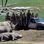 san-diego-safari-park
