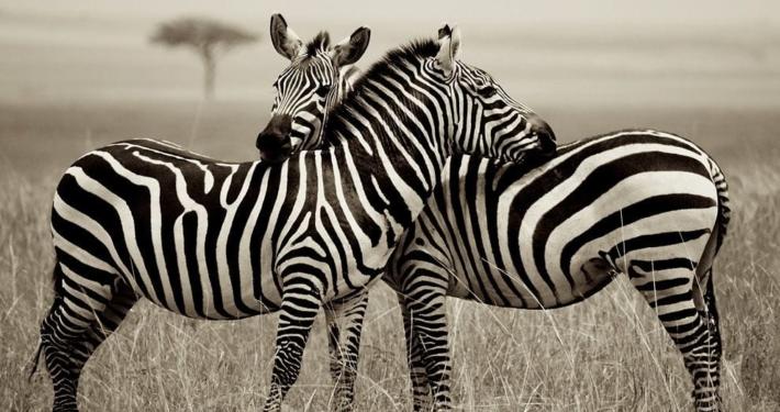 Hell's Gate National Park, Kenya 4