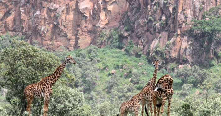 Hell's Gate National Park, Kenya 5