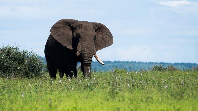 Safari Destinations: Inspiration On Where To Go 10