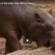 safari encounters on film