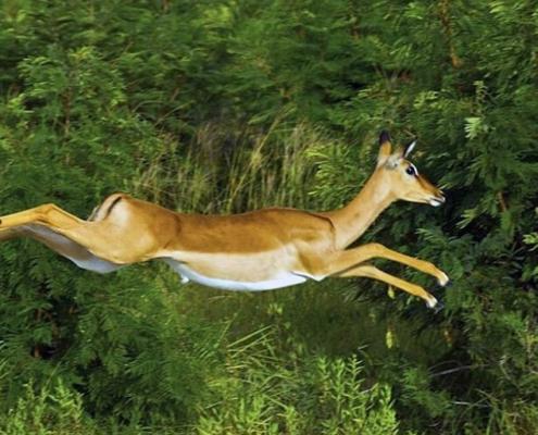 impala-lush-green