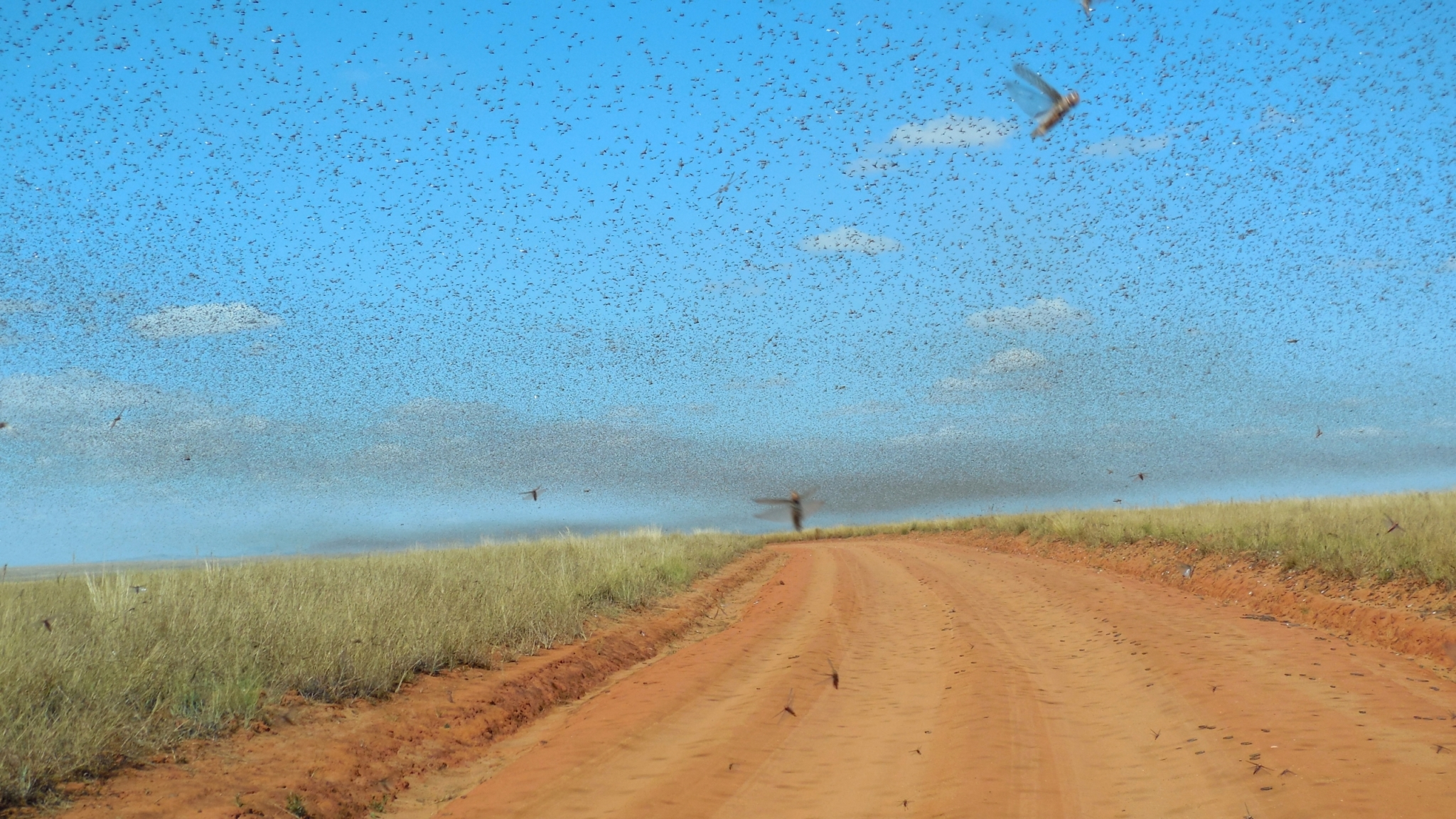 A plague of locusts flying