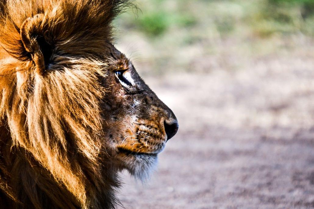 mehru-national-park=keny