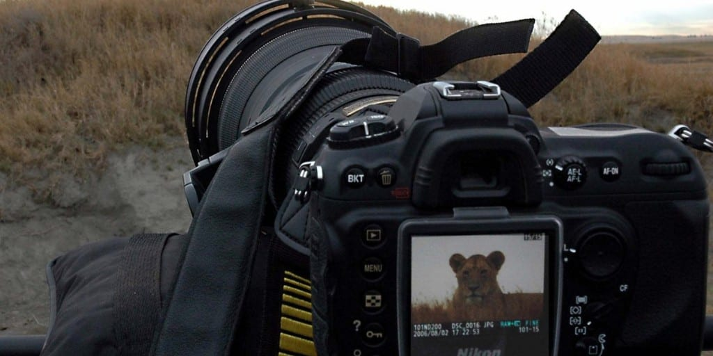 close up of digital camera taking picture of female lion