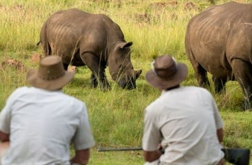 three peopl squatting on a walking safari in khaki safari clothes, watching two rhinos