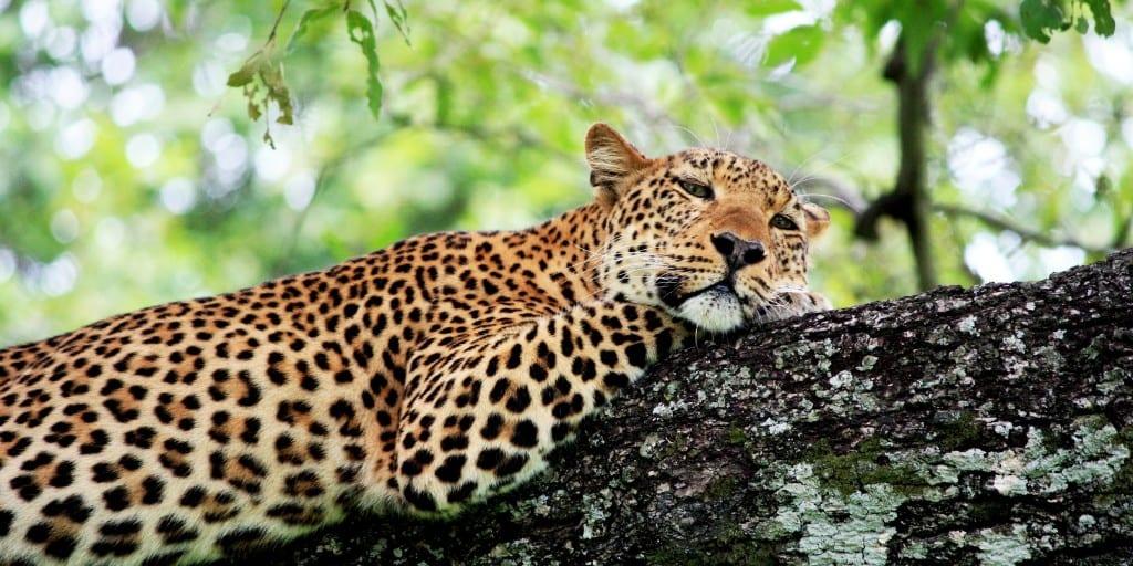 Safari Destinations: Inspiration On Where To Go 8
