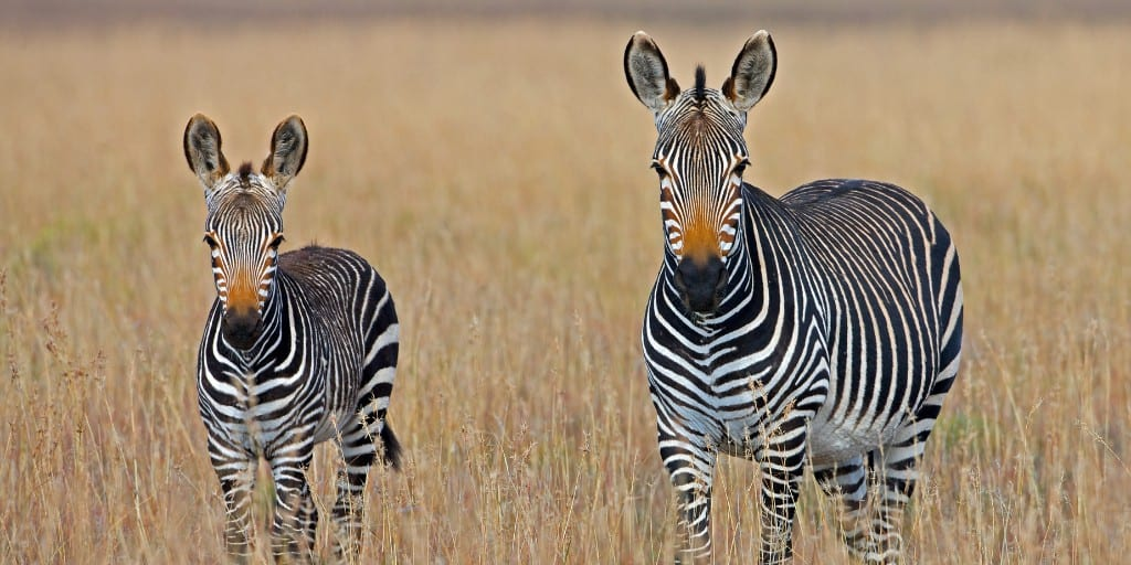 African National Parks 10