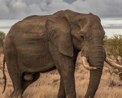 Biggest Animals In The World 2