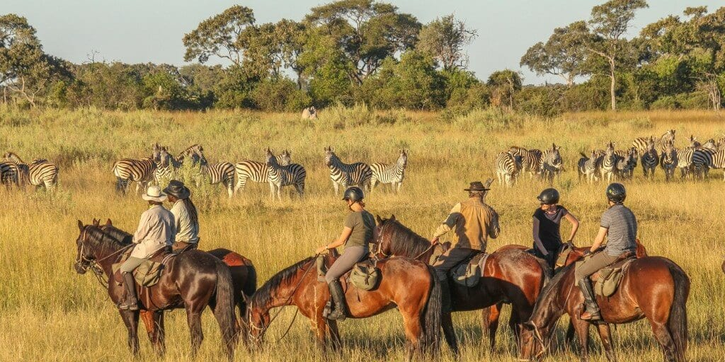 group of riders on horseback looking at herd of zebras standing in long grass