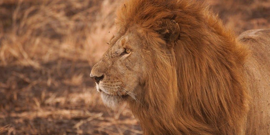 Safari Destinations: Inspiration On Where To Go 4
