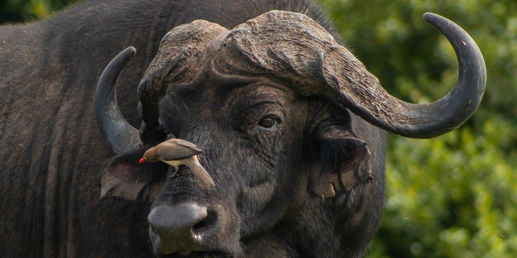 Safari Animals 2