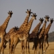 Africa's 50 Largest National Parks 17