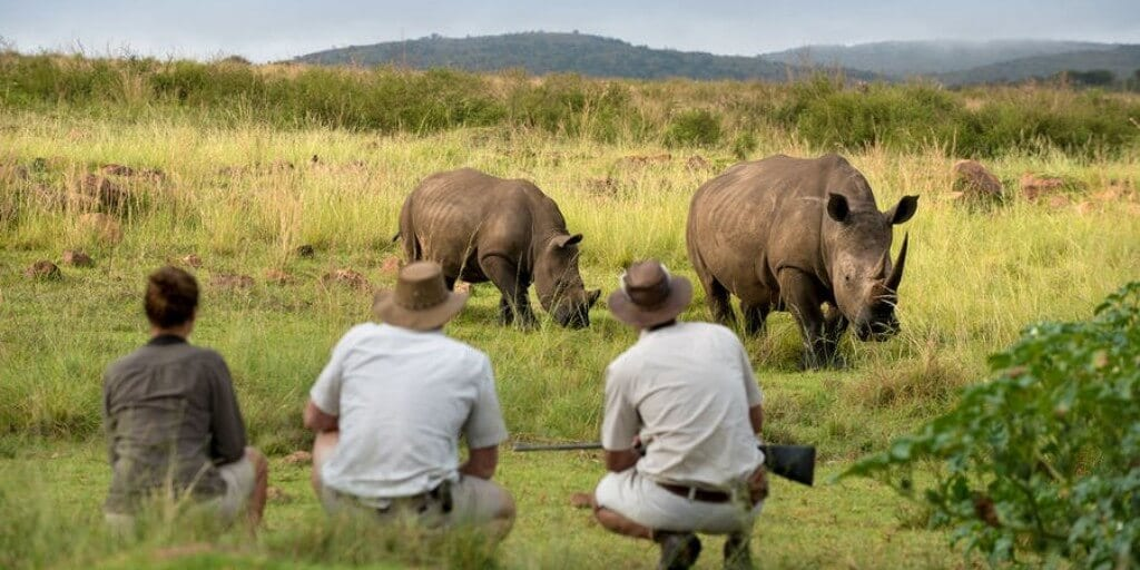 three people in safari wear kneeling down, looking at two rhinos with mountains in background