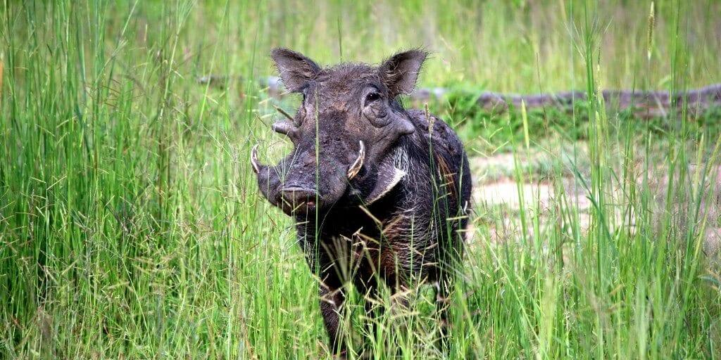 Safari Animals 4