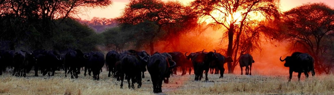 Africa's 50 Largest National Parks 3
