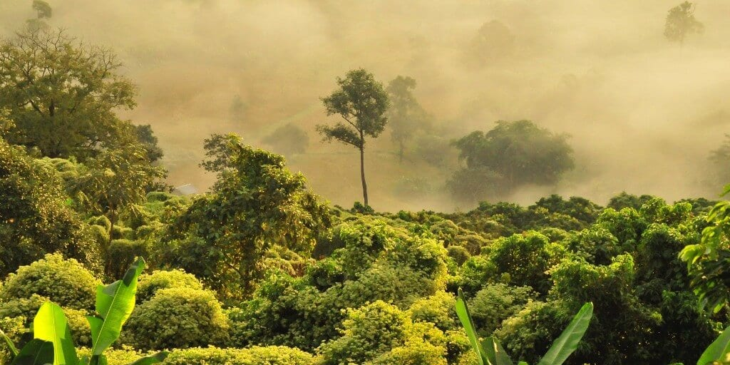 african jungle canopy covered in mist
