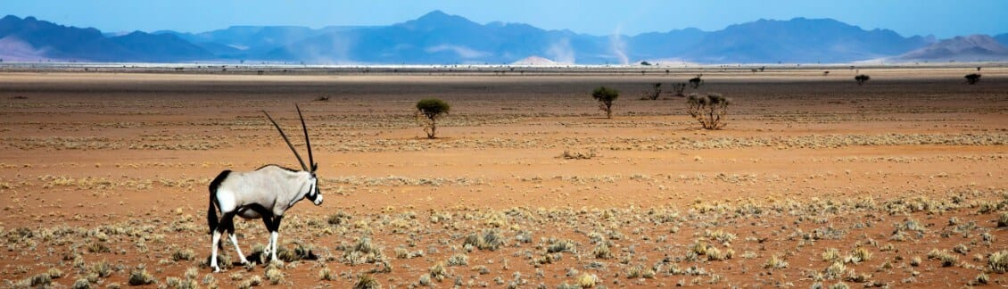 largest national parks in africa - oryk in namib desert