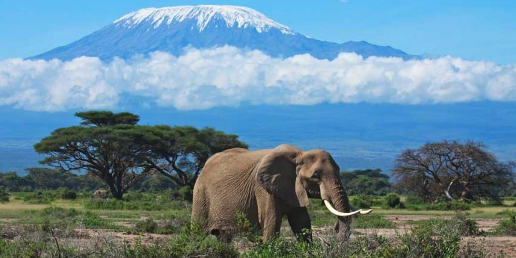 An elephant walks through Amboseli National Park with the majestic Mount Kilimanjaro as the backdrop and a thin band of cloud