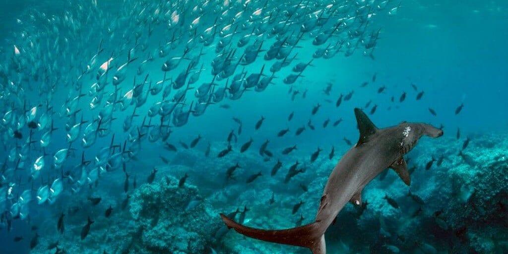 Galapagos Marine Reserve, Ecuador