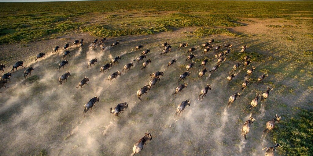 Liuwa Plain Wildebeest Migration