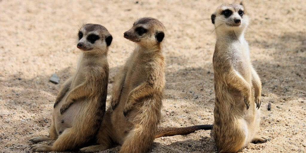 What Are 'The Shy Five' Animals? 3