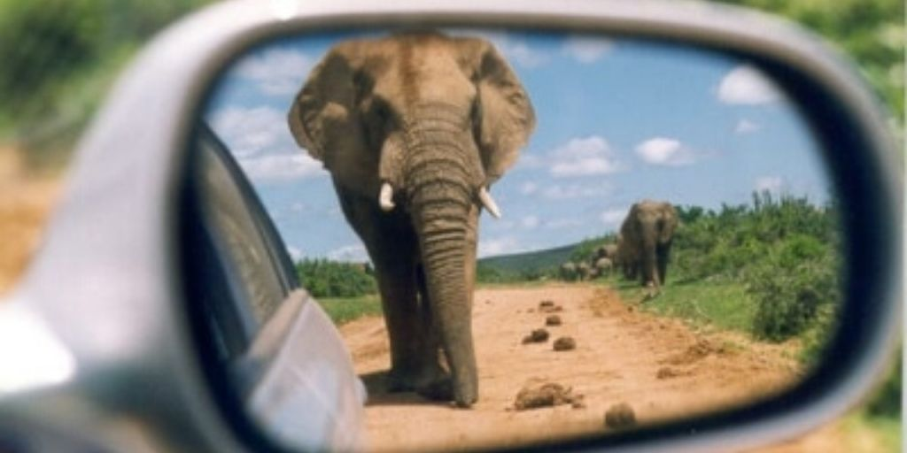 an elephant walks towards a car, as seen in the rear view mirror
