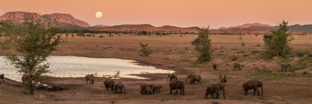 elephants congregating around a large watering hole at a rosy dusk